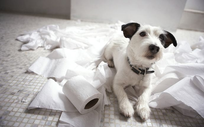 How to stop your dogs from chewing home furniture